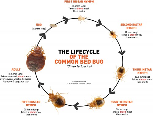 HOW TO GET RID OF BED BUGS EASILY