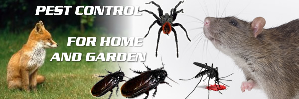Best Pest Control header image (3)